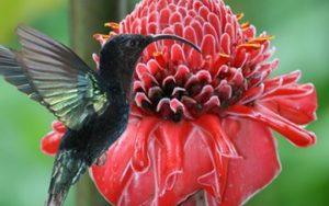 Fleurs et oiseaux de Martinique