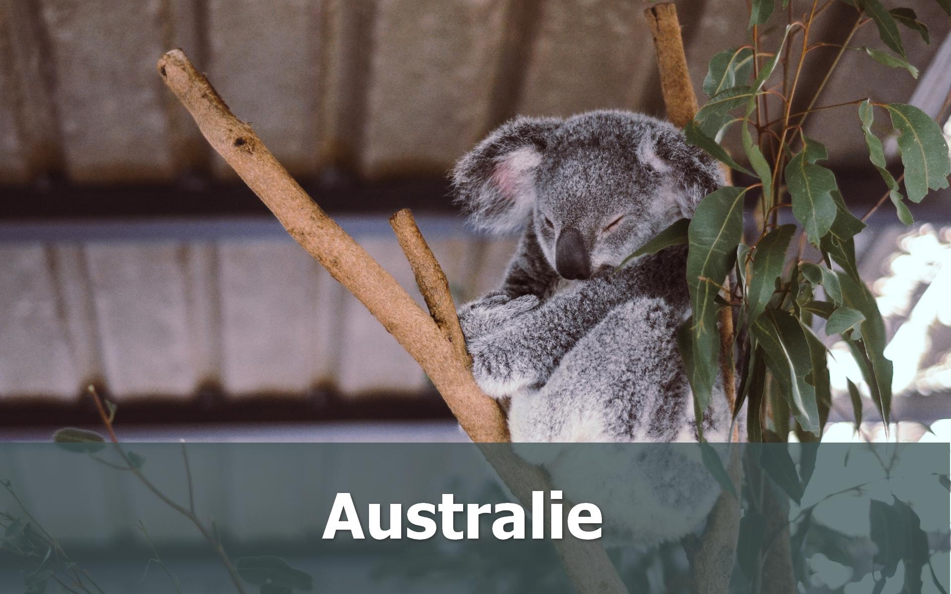 Voyage en Australie sur-mesure Koala