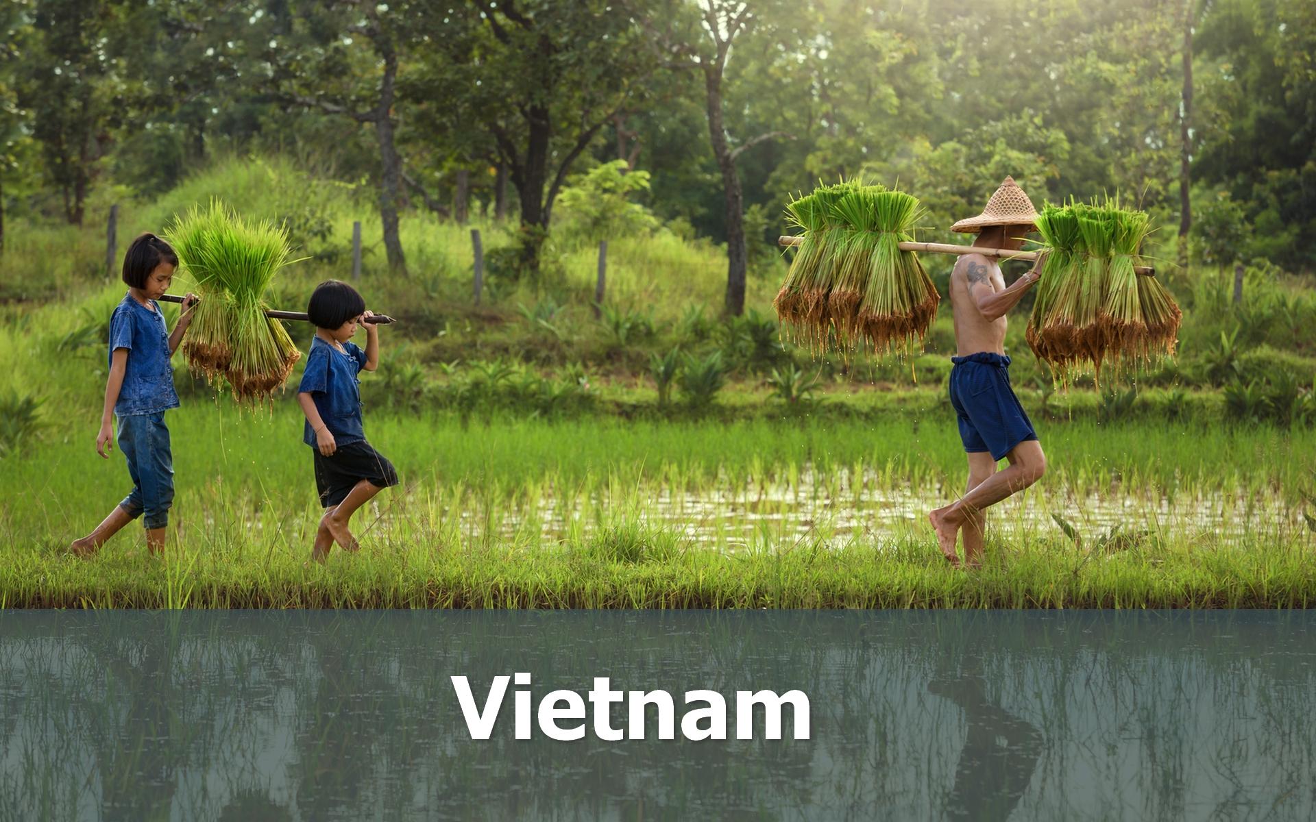 Voyage au Vietnam sur-mesure rizières