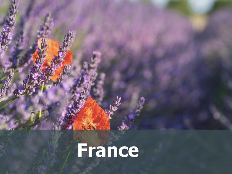 Voyage en France sur-mesure Lavande