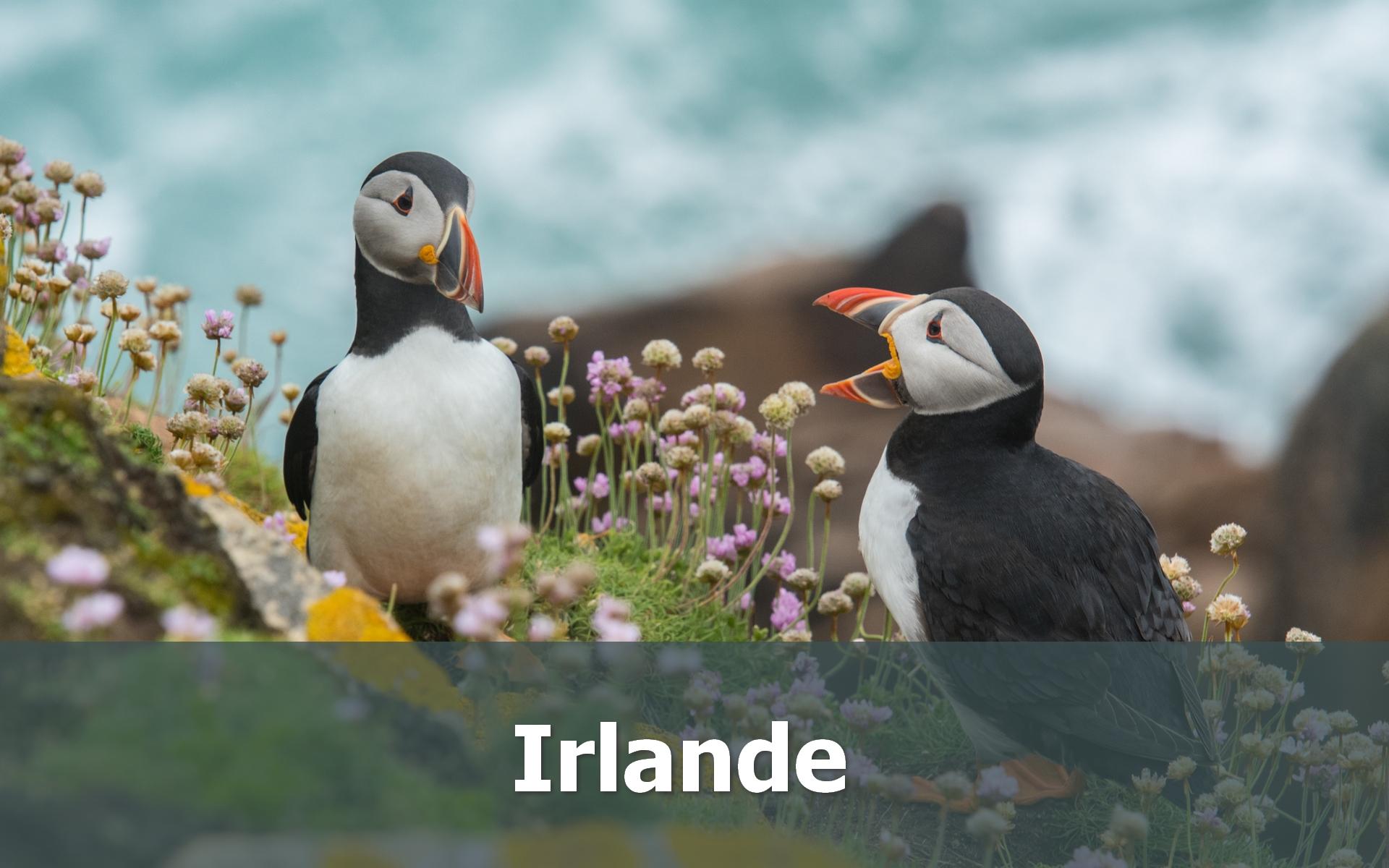 Voyage en Irlande sur-mesure puffins