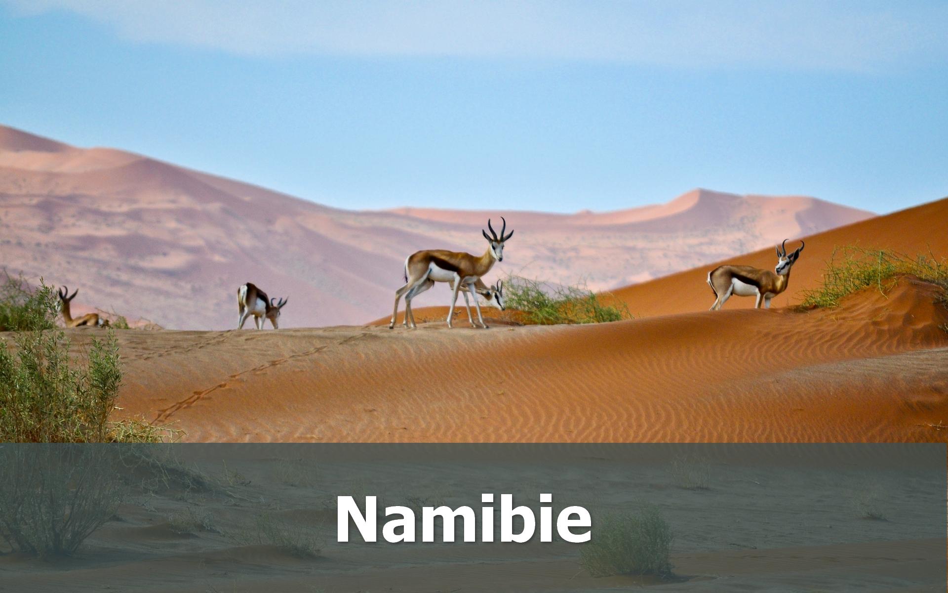 Voyage en Namibie sur-mesure désert