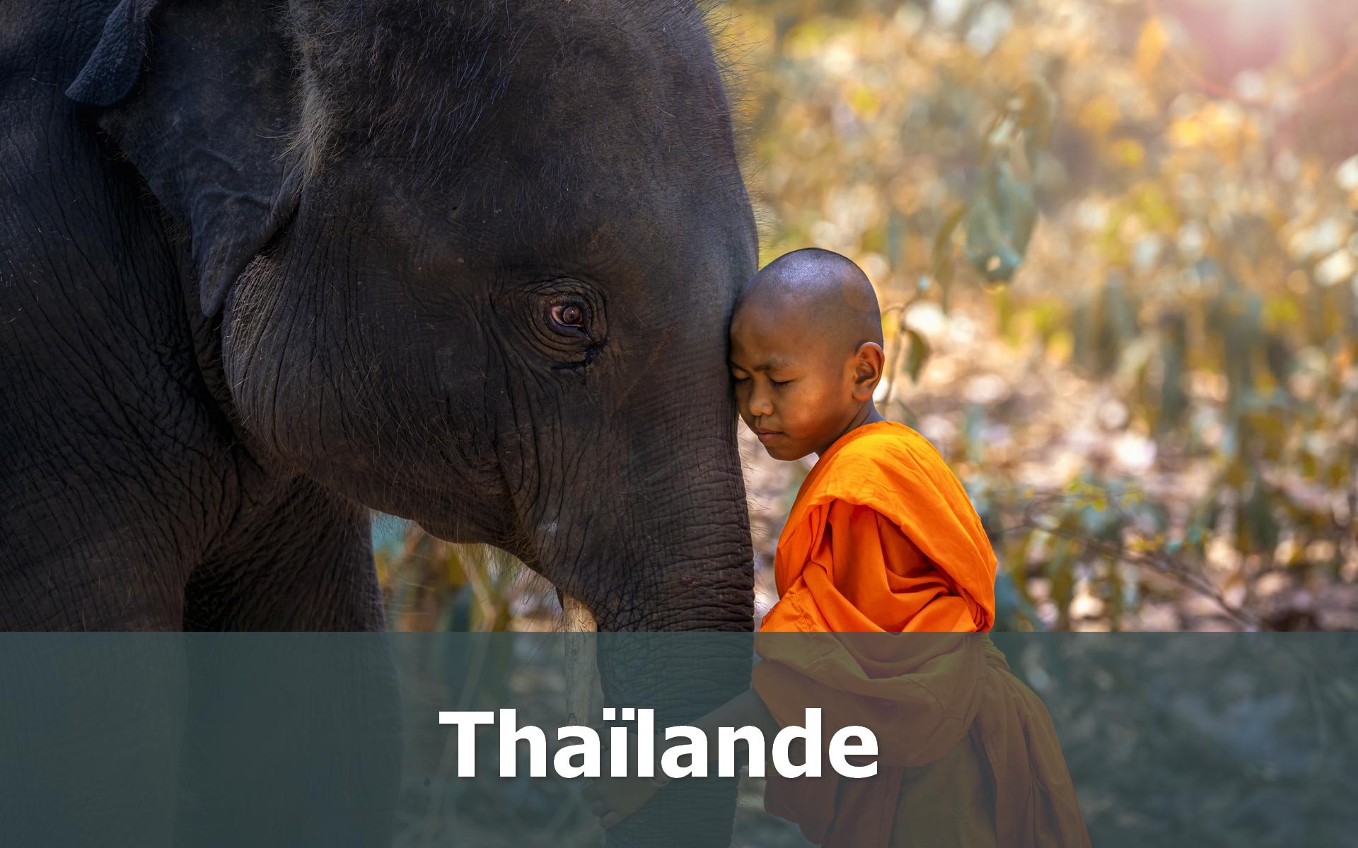 Voyage en Thaïlande sur-mesure éléphant