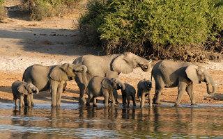 Éléphants au Parc Chobe au Botswana
