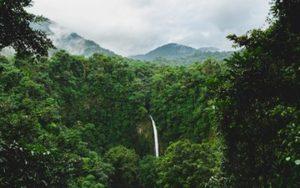 Forêt luxuriante au Costa Rica