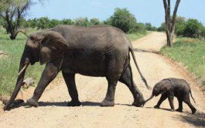 Famille d'éléphants au Kenya