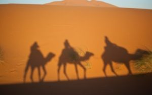 chameau dans le desert du maroc