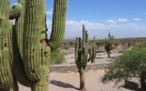 Desert en Argentine