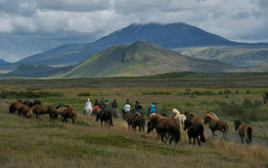 Randonné à cheval en Islande