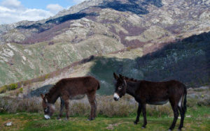 Âne de Randonnée en Corse