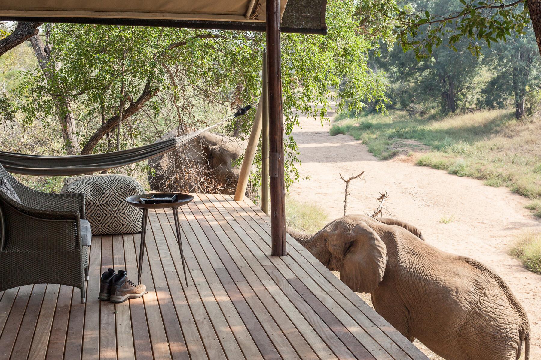 Safari à pied dans la brousse africaine