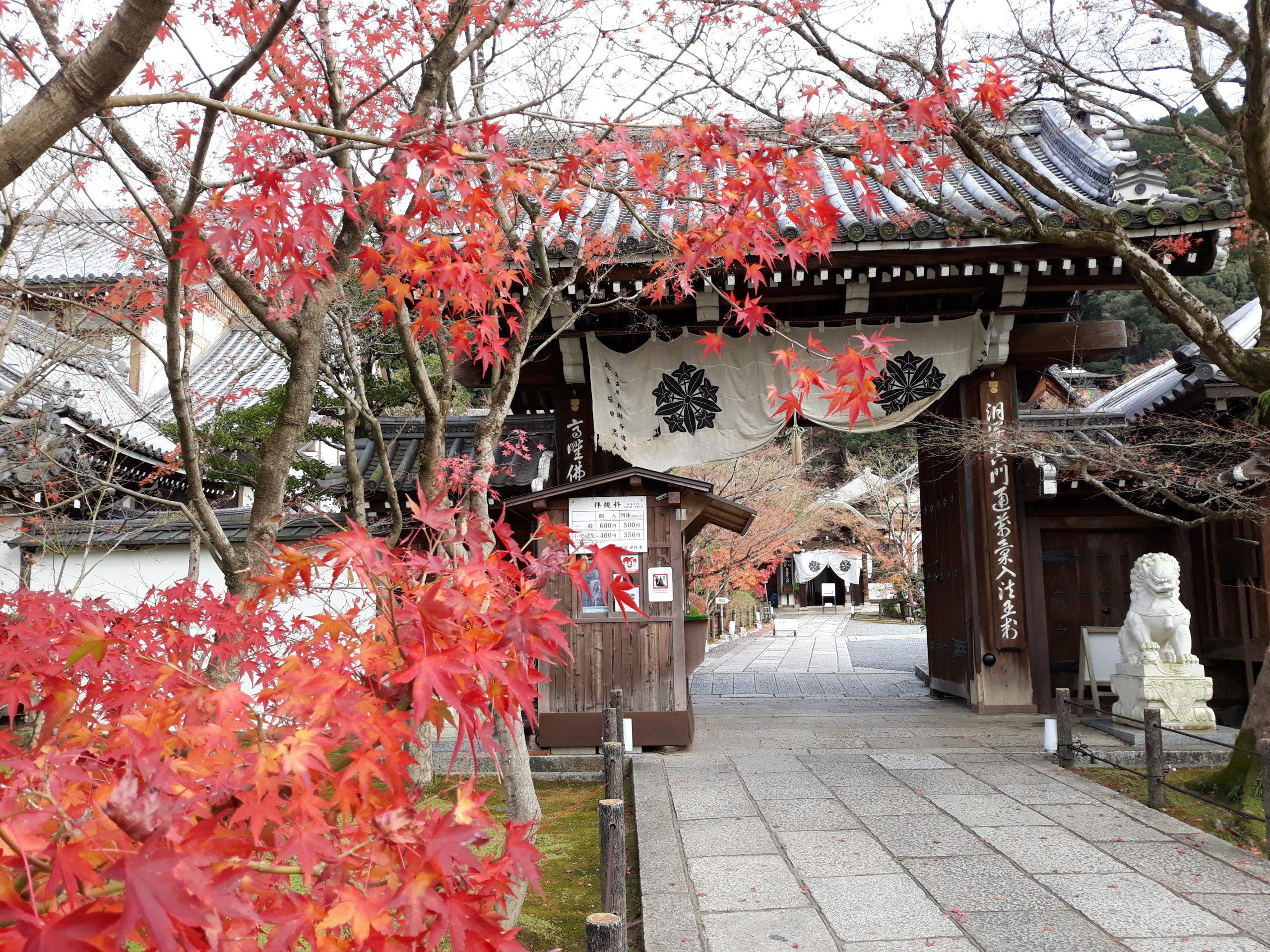 voyager au Japon à l'automne