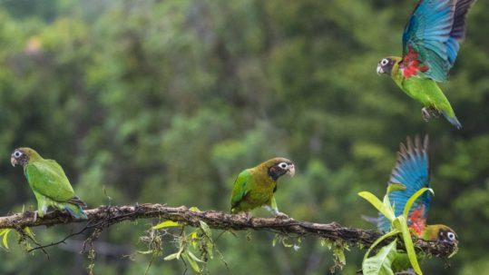 Costa Rica authentique Boca Tapada