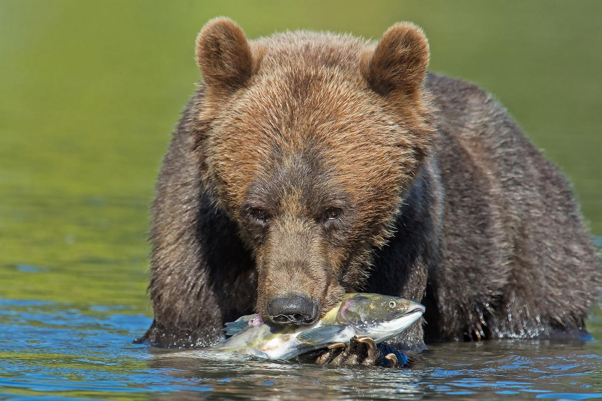 Lodge grizzlys ouest canadien